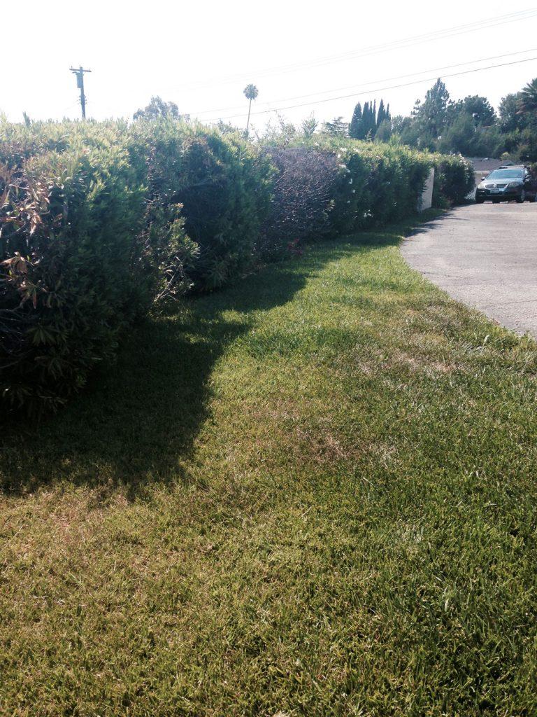 Hedge4